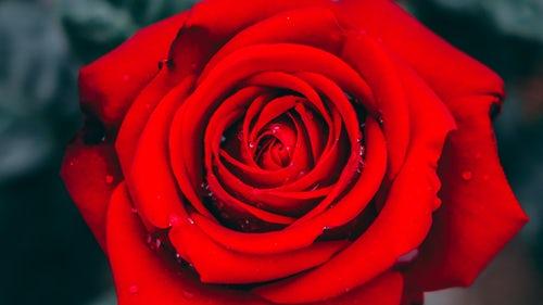 die schönen rosen anarchafeministische literatur