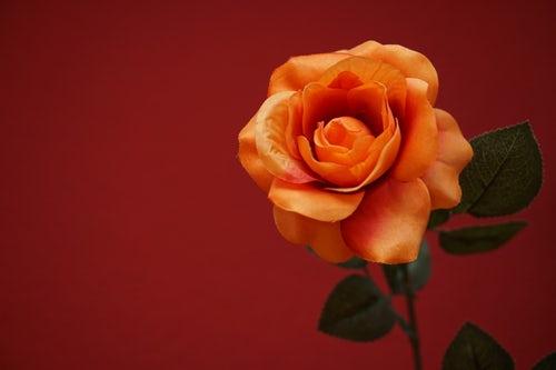 die schönen rosen blog klavierlehrerin verprügelt nachbarn