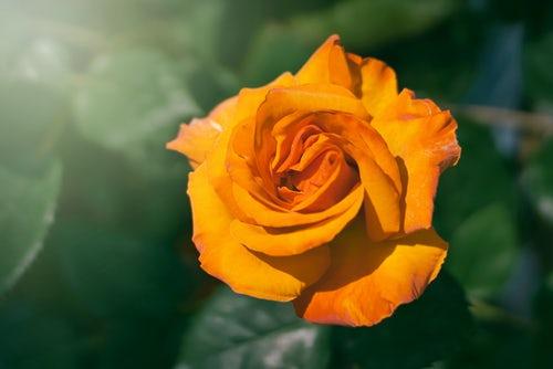 die schönen rosen blog positionen religion kritik
