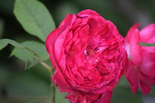 die schönen rosen blog positionen staatskritik feministisch