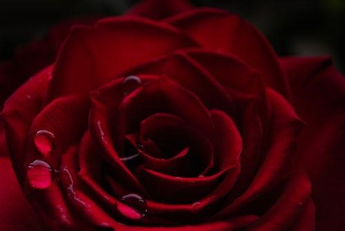 die schönen rosen blog verfolgungswahn paranoide schizophrenie