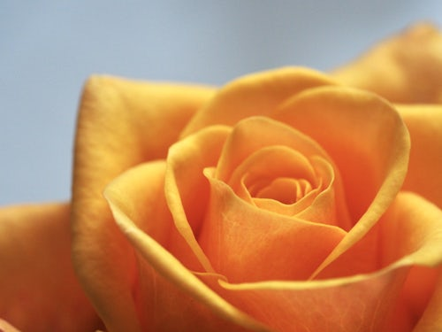die schönen rosen blog parlamentarische demokratie als rohrkrepierer