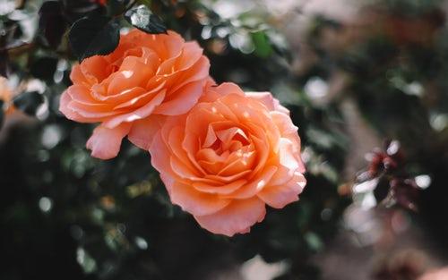 die schönen rosen blog - mein körper gehört mir