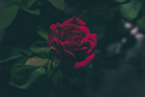 die schönen rosen blog geschichten aus dem patriarchat zu corona zeiten teil 2