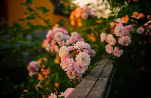 die schönen rosen blog geschichten aus dem patriarchat zu corona-zeiten teil 5-10