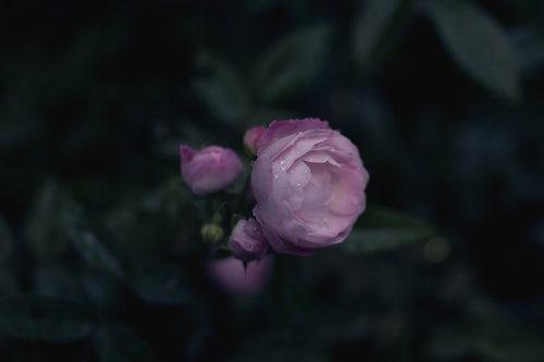 die schönen rosen blog - geschichten aus dem patriarchat zu corona-zeiten alte freundschaften teil 16