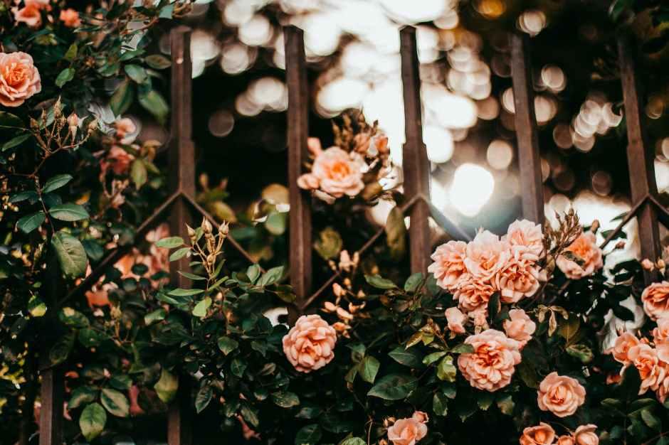 die schönen rosen blog - an die ahnen gedicht